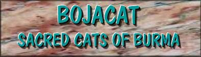 Bojacat Sacred Cat of Burma logo